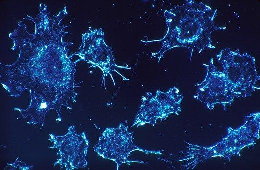 Immuno-Oncologie